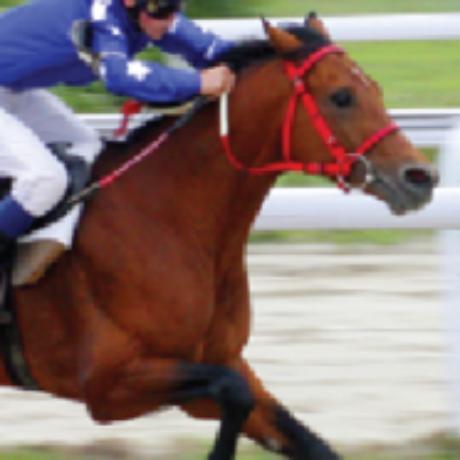 Group logo of SCENAR for Equine Group